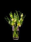 Florero del vidrio de la floración de la cebolla Imagen de archivo libre de regalías