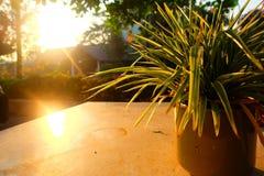 Florero por la mañana Foto de archivo