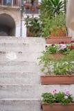 Floreros con las flores y las plantas verdes Imagen de archivo libre de regalías