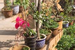 Floreros con las plantas coloreadas en el jardín del templo de Yuantong Fotografía de archivo libre de regalías
