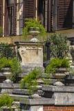Floreros concretos grandes con las plantas ornamentales Imagen de archivo