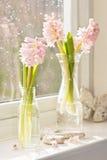 Floreros de jacintos Imágenes de archivo libres de regalías