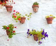Floreros de la terracota con las flores coloridas que cuelgan en la pared blanca Foto de archivo libre de regalías