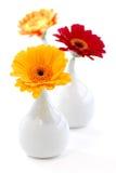 Floreros del diseño interior Imagen de archivo