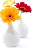 Floreros del diseño interior Fotografía de archivo libre de regalías