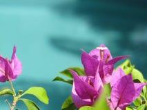Floresça a água azul da associação Foto de Stock Royalty Free