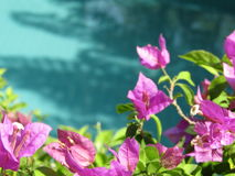 Floresça a água azul da associação Imagens de Stock Royalty Free
