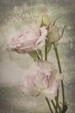 Floresça as flores bonitas do vintage preto do projeto feitas com cor f Fotografia de Stock
