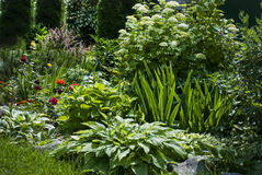 Floresça as plantas arranjadas na composição no jardim Fotografia de Stock