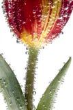 Floresça com bolhas de ar Imagens de Stock