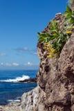 Floresça em um penhasco no fundo do oceano Fotografia de Stock Royalty Free
