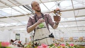Floresça a estufa, o plano geral de um homem que se importe com plantas gotas da água no fundo da luz solar video estoque