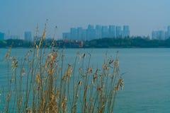 Floresça a grama no fundo do céu azul e do rio Imagem de Stock