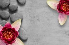 Floresça lótus e os termas de pedra do zen no fundo cinzento foto de stock