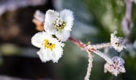 Floresça na planta no frio gelado fotografia de stock royalty free
