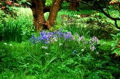 Floresça no parque botânico bonito em Kiel Germany imagem de stock