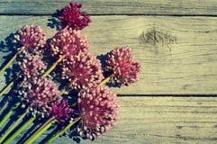 Floresça o fundo do vintage com as flores de cebolas selvagens Imagens de Stock Royalty Free