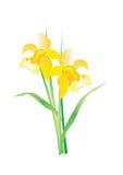 Floresça o narciso ilustração royalty free