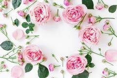 Floresça o quadro com rosas, os botões e as folhas cor-de-rosa no fundo branco Configuração lisa, vista superior Fundo do quadro  fotografia de stock