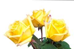 Floresça o ramalhete das rosas amarelas isoladas no branco Fotografia de Stock