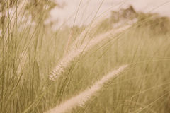 Floresça o sopro de vidro no borrão de movimento do vento Foto de Stock