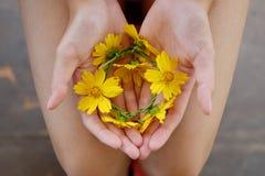 Flores à disposição Imagens de Stock Royalty Free
