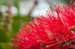 Flores às hastes Fotografia de Stock