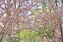 Flores, árvores, mola, verão, brilhante, roxo, vermelho, cor, curso, Europa, Amsterdão Imagens de Stock Royalty Free