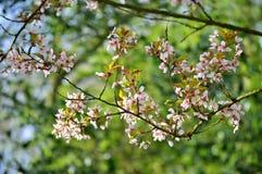 Flores, árvores, mola, verão, brilhante, roxo, vermelho, cor, curso, Europa, Amsterdão, verde foto de stock royalty free