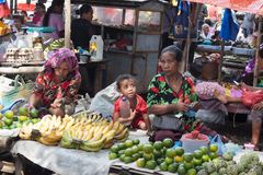 FLORES Ö, INDONESIEN, 2012-04-18: grandsmas och se för ung unge arkivbilder
