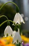 Flores 02 da mola Imagem de Stock Royalty Free