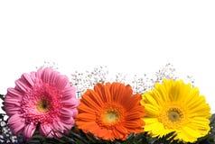 Flores 1 Fotografia de Stock