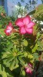 flores Zdjęcie Stock