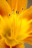 Flores Stock Fotografie