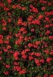 Flores 14 Foto de archivo libre de regalías