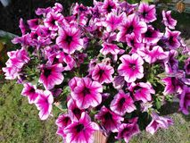 Flores imagen de archivo