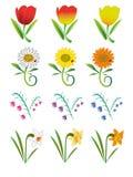 Flores. ilustração royalty free