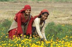 Flores 2 da colheita Imagem de Stock Royalty Free