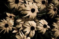 Flores Fotos de Stock Royalty Free