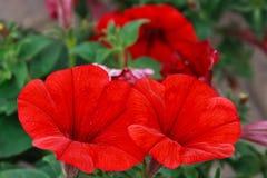 Flores 13 Imagem de Stock