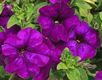 Flores 24 fotografia de stock