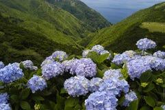 Flores fotografia de stock royalty free