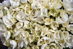 Flores 22 imagens de stock royalty free