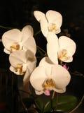 Flores. Fotografía de archivo