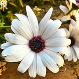 Flores Imagem de Stock