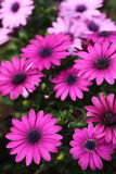 Flores fotografía de archivo libre de regalías