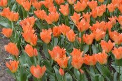 Flores Imagenes de archivo