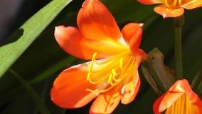 Flores vídeos de arquivo