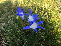 Flores foto de archivo libre de regalías
