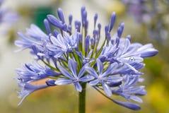 flores Photographie stock libre de droits